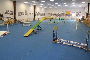 Here is a full view of the Agility Course at Joseph's.